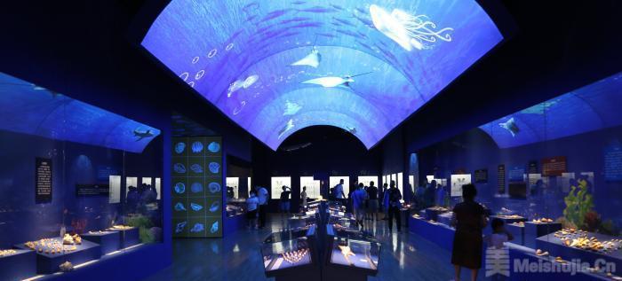 山东博物馆展出3000余件海洋贝类标本 探究神秘海洋世界